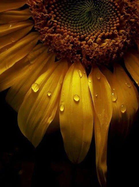 Flower-1831.jpg