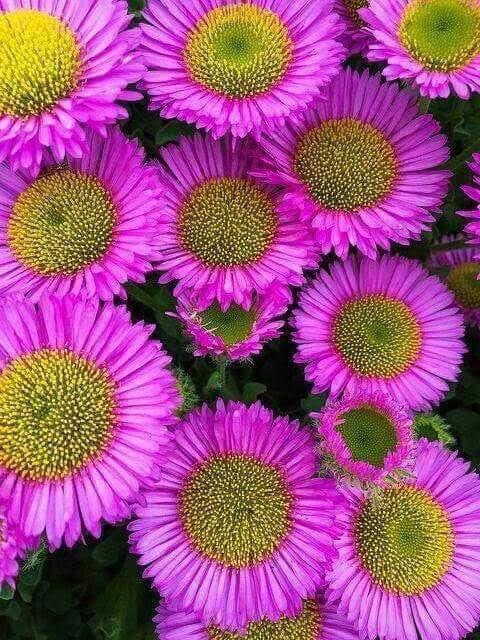Flower-1843.jpg