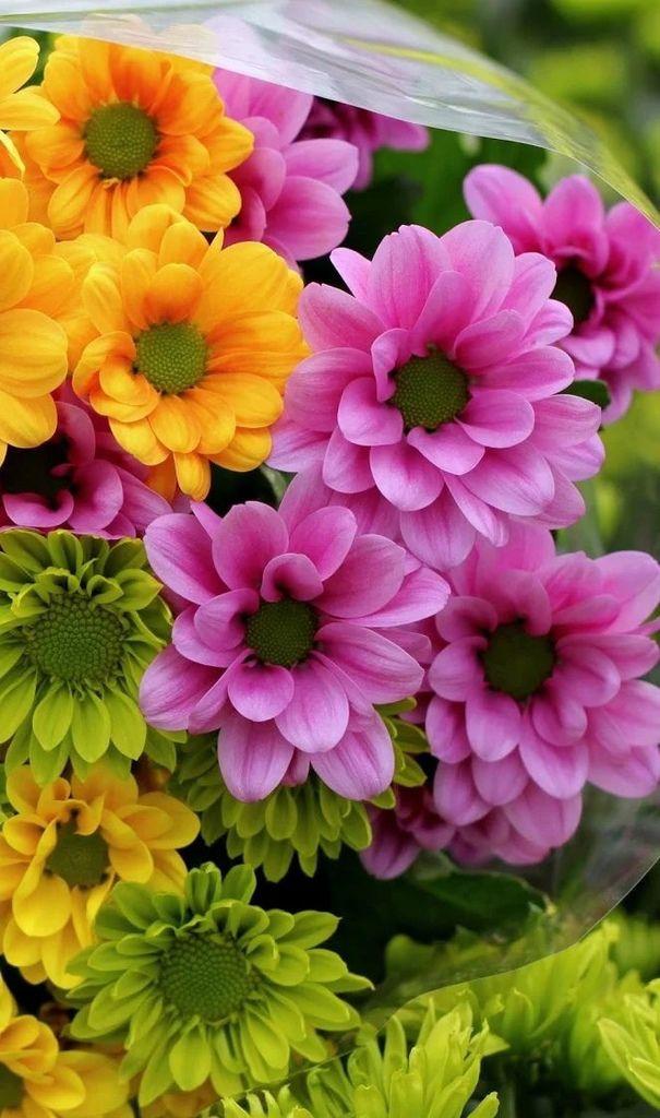 Flower-1844.jpg