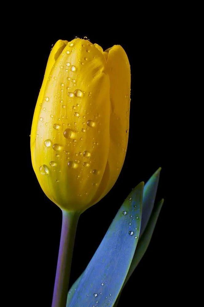 Flower-1846.jpg