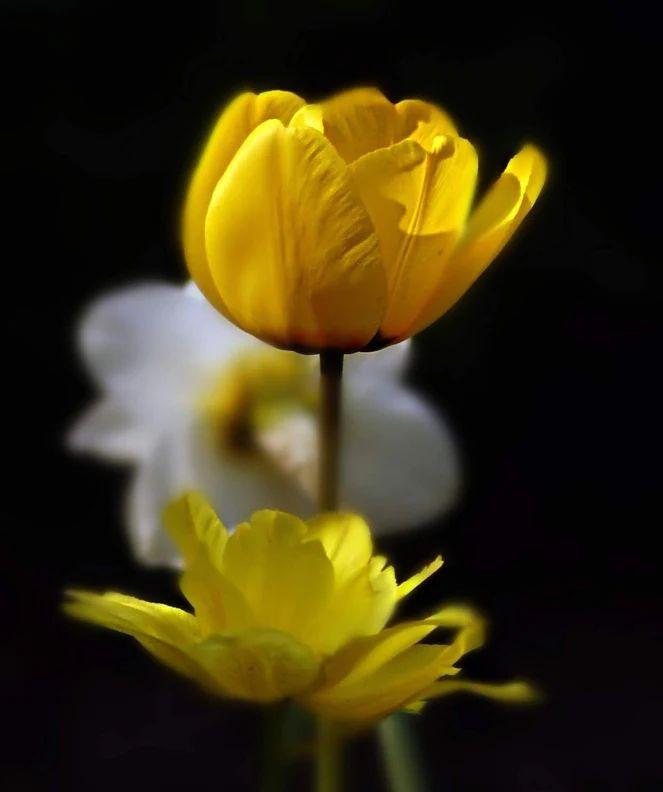 Flower-1847.jpg