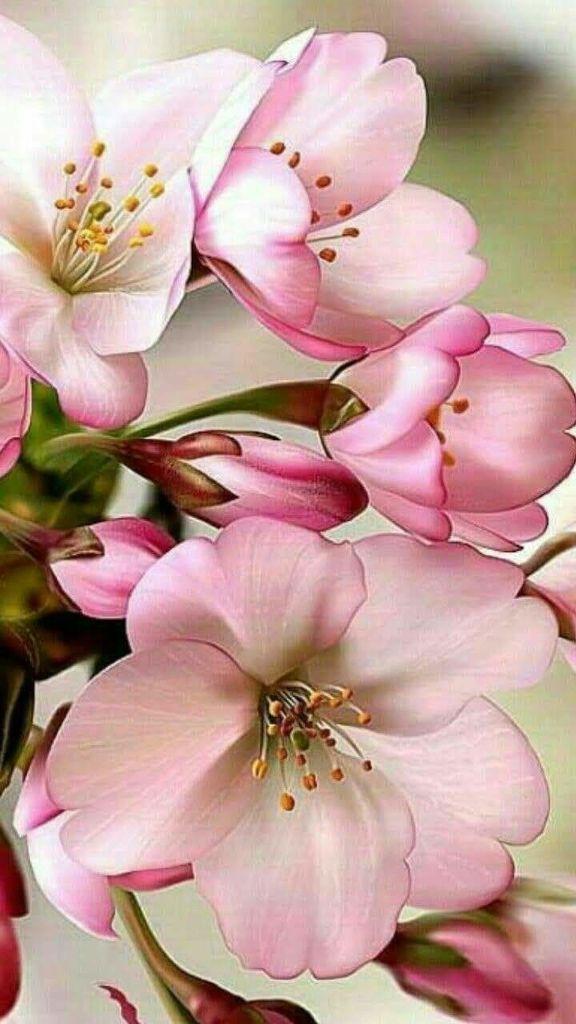 Flower-1849.jpg