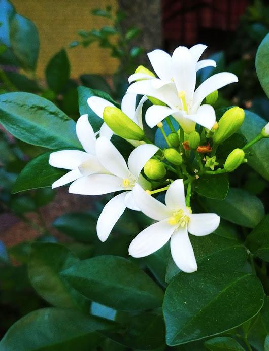 Flower-1850.jpg
