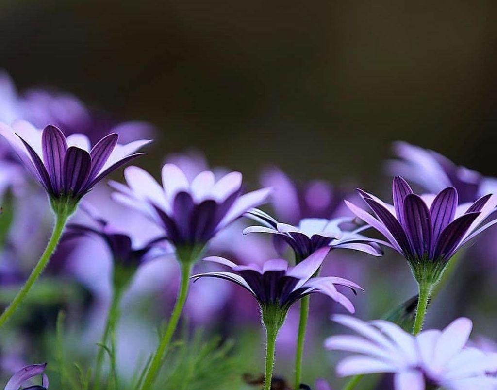 Flower-1851.jpg