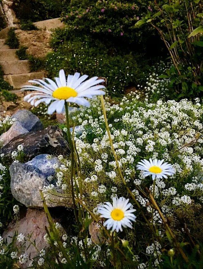 Flower-1857.jpg