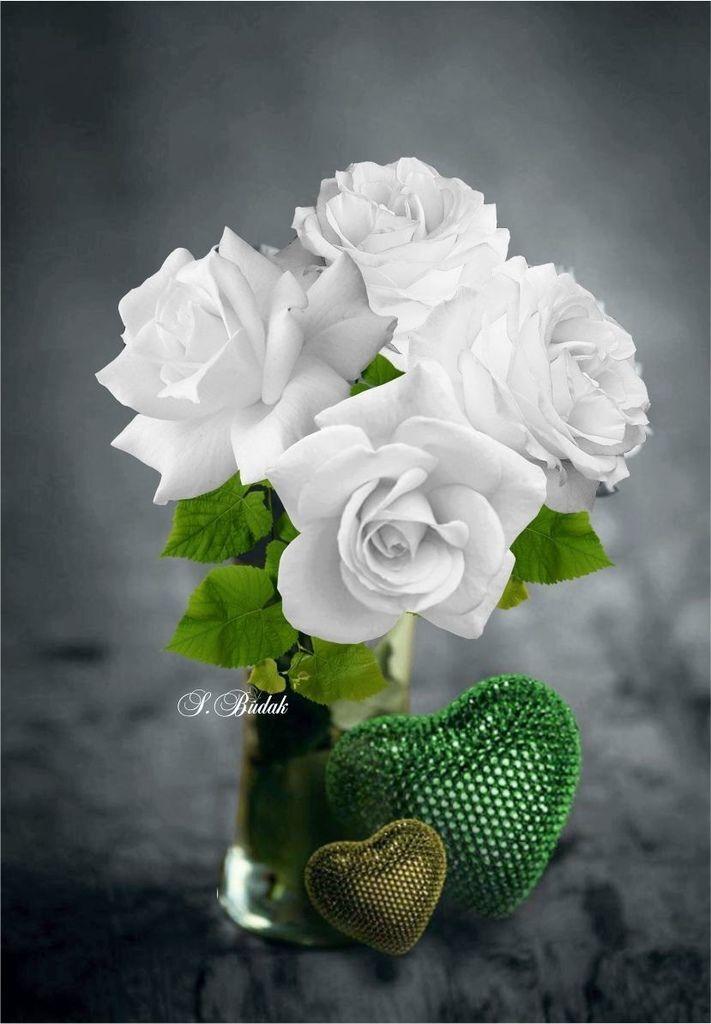 Flower-1909.jpg