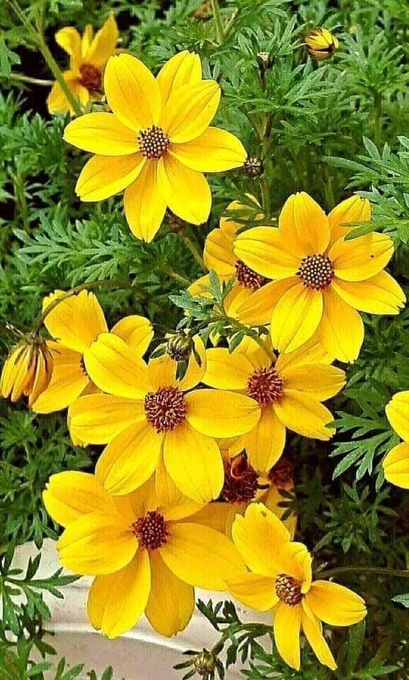 Flower-2034.jpg