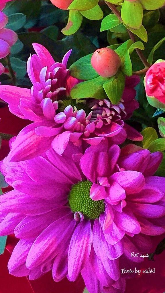 Flower-2037.jpg