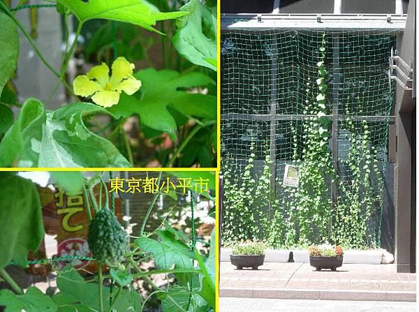綠色植物窗簾