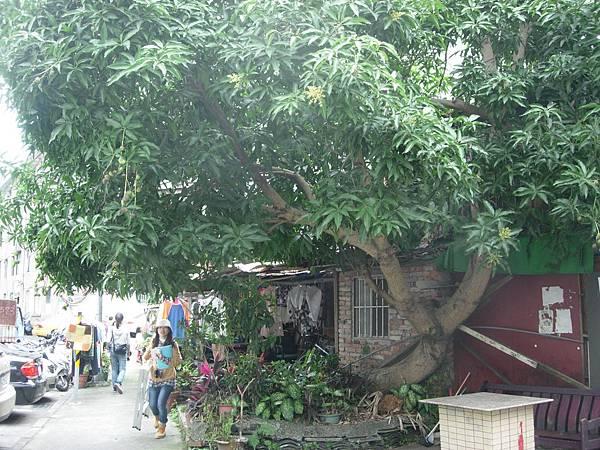 2013土芒果-社區公共空間