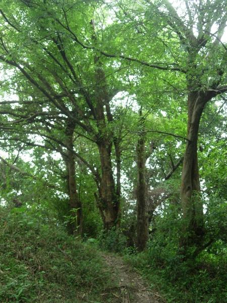 鬧區難得的荒野-客家公園預定地