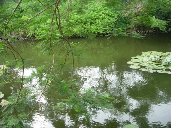 波哥的水池.JPG