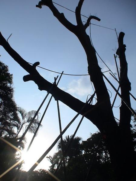 松菸老樹的日出
