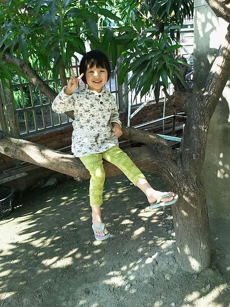 坐樹上有倚靠