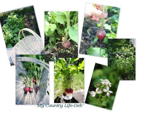 小花園o近事