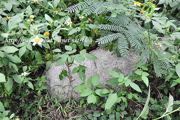 黃汴墓墓坊頂上的小石獅