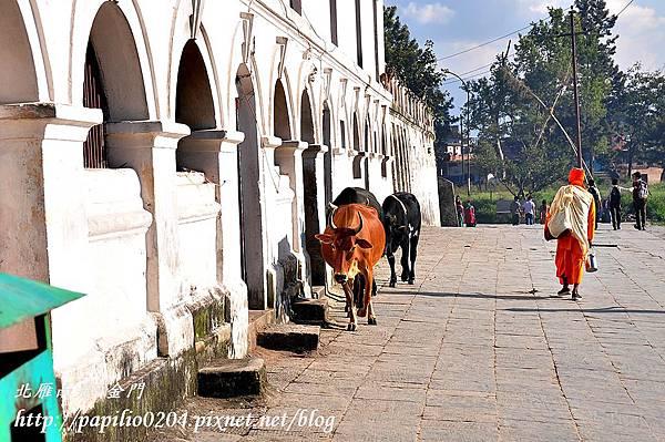 帕素帕蒂納廟(Pashupatinath)