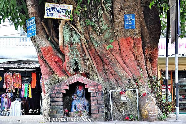 波卡拉(Pokhara)市區菩提樹下的神像