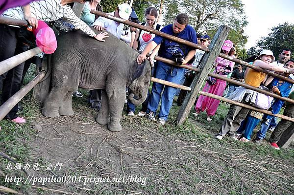 奇旺國家公園(Chitwan National Park)大象撫育中心裡的四個月小象