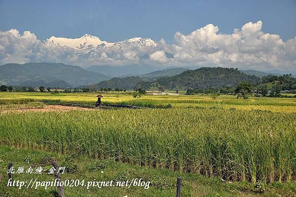 從博達納佛塔(Bouddhanath)到納嘉闊特(Nagakot)圖中見到的稻田與雪山
