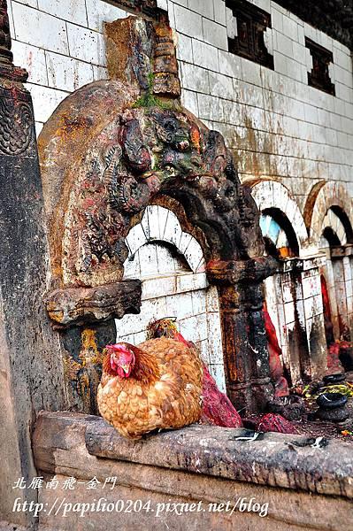 巴克塔布(Bhaktapur)古都隨拍