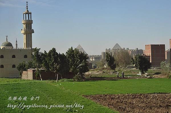 從開羅市區遠望金字塔