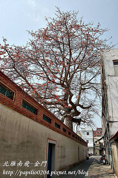 百年木棉老樹