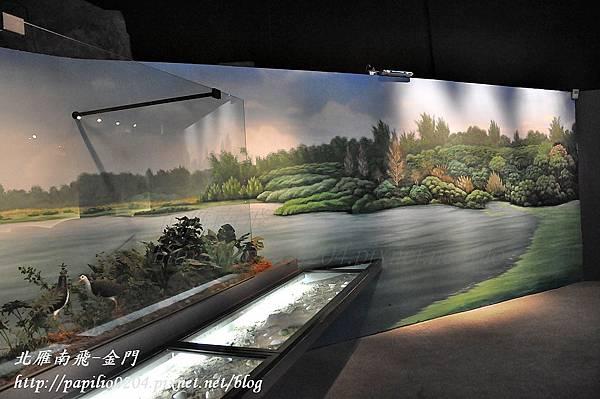 第一展示室-金門的海洋之自然生態