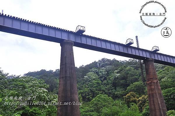 舊山線鐵道沿線的桐花-魚藤坪鐵橋
