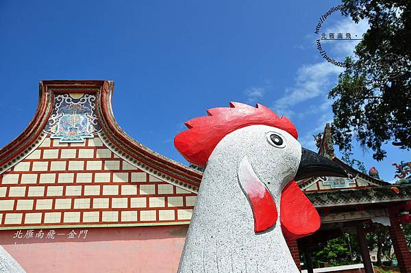 上林白雞(風雞)2009/08/13