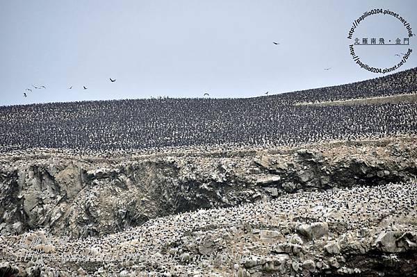 遠望北島(isla norte)上的鳥群