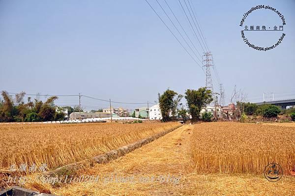 收割中的小麥田