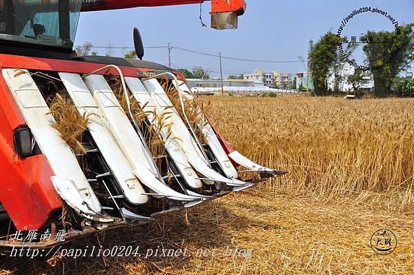小麥田收割機