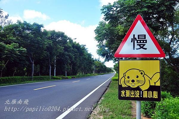 0243黃海路陽明段水獺出沒警告牌