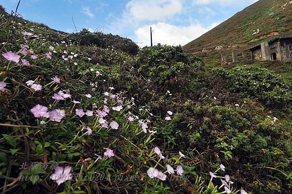 清水澳中的野花