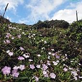 清水澳野花
