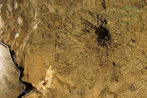 安東坑道內部挖鑿時的炸藥孔