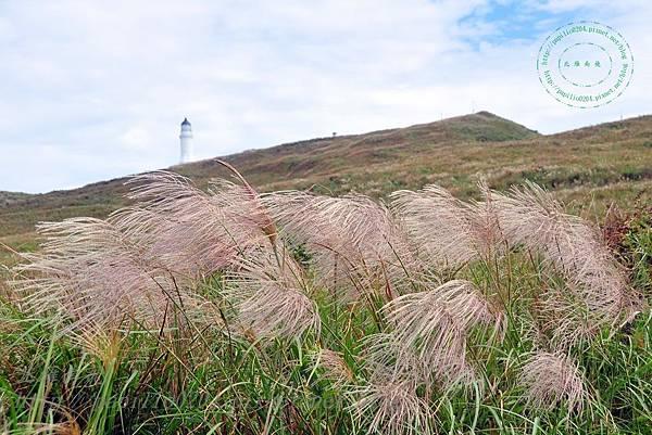 芒草坡遠望彭佳嶼燈塔