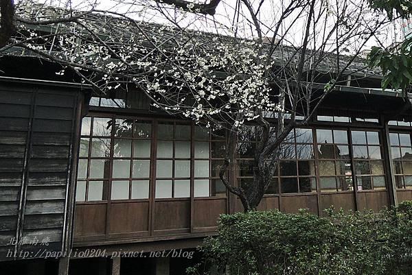 16國父史蹟紀念館旁的梅花.JPG