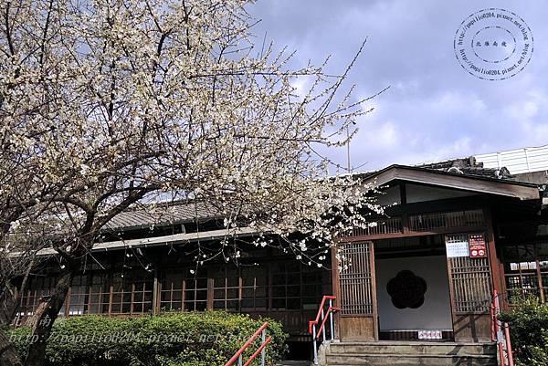 20國父史蹟紀念館旁的梅花.JPG