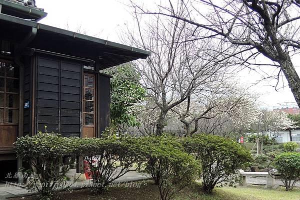 22國父史蹟紀念館旁的梅花.JPG