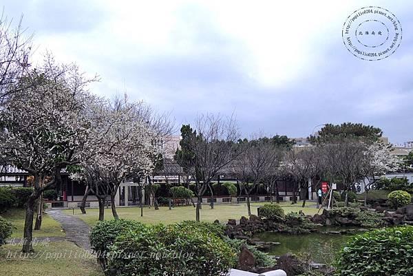 23逸仙公園中盛開的梅花.JPG