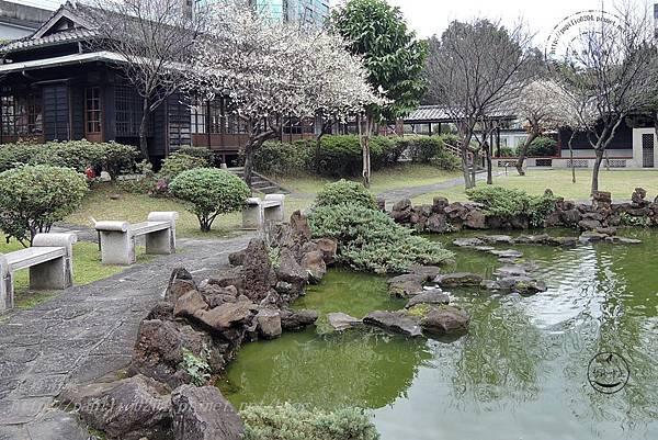 27逸仙公園水池旁盛開的梅花.JPG
