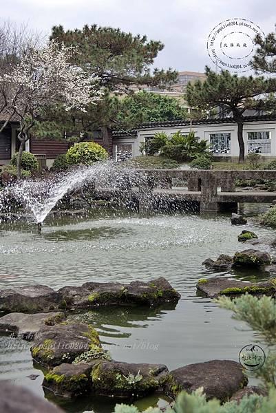 32逸仙公園水池旁盛開的梅花.JPG