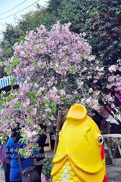 22員農種苗芬園花卉生產休憩園區州府枝垂櫻.JPG