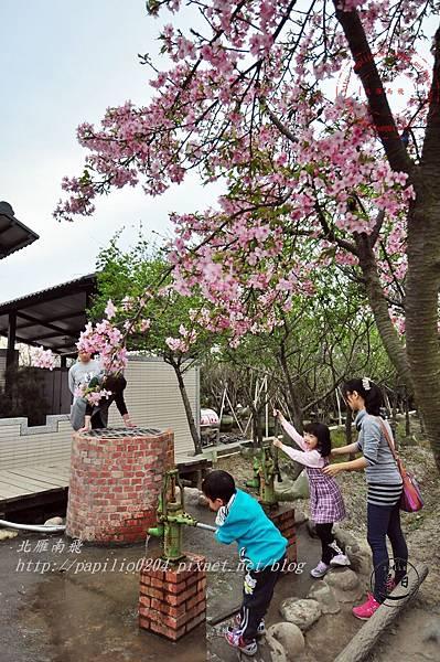26員農種苗芬園花卉生產休憩園區州府枝垂櫻.JPG