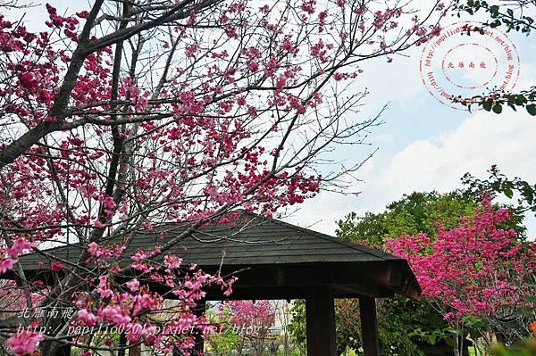 23 新社區公所賞櫻2014 .JPG