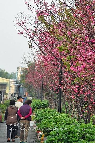 06 台中南門溪旁南門環保公園櫻花步道.JPG
