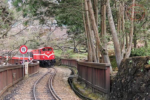 34阿里山小火車.JPG