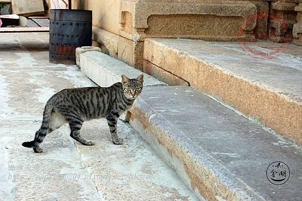 01料羅吳氏古厝前的貓咪